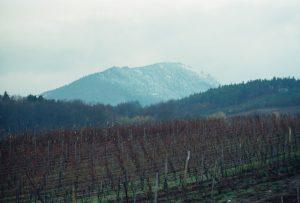 L'Ungersberg et les vignes